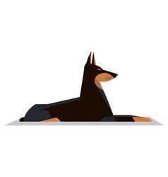 dobermann lies on the ground vector image