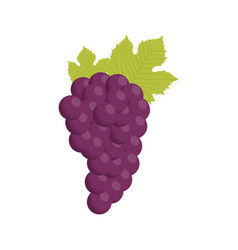 Grape bunch fruit healthy vector