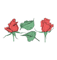In form flowers roses vector