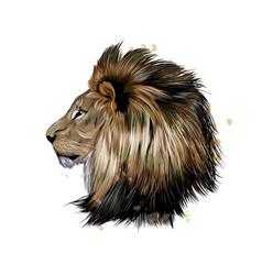 lion head portrait from a splash watercolor vector image