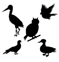 Monochrome silhouettes of different birds species vector image