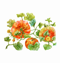 Three orange pumpkins grow on the bed watercolor vector