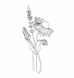abstract plant one line drawing hand drawn modern vector image
