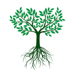green tree with roots and leafs vector image