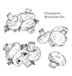Ink champignon mushrooms sketches set vector