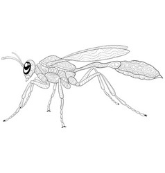 Adult coloring bookpage a cute wasp image for vector