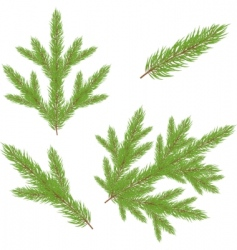 Christmas fur tree illustration vector image