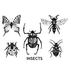 Collection hand drawn insect vector