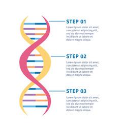 Genetic structure dna molecule vector