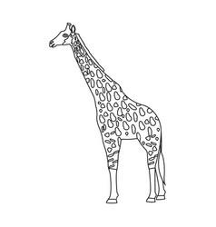 Giraffe is the highest land animal a wild animal vector