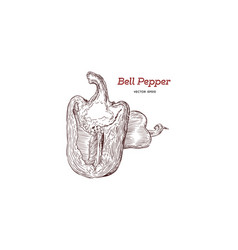 pepper hand drawn set vector image