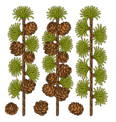 set of color images of larch and cones vector image