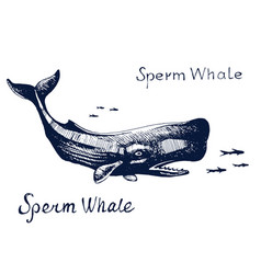 sperm whale the animal on the hunt for fish vector image vector image