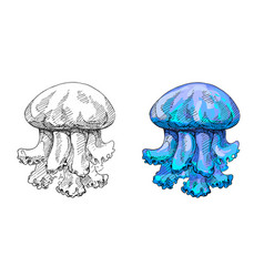 jellyfish hand made ink drawing vector image
