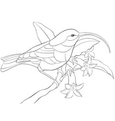 Adult coloring bookpage a cute hummingbird vector
