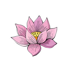 pink lotus flower on white background in vector image