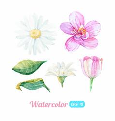 set watercolor flower elements vector image
