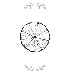 lime and leaves template design decorative vector image vector image
