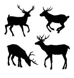 Decoration elegance horned object shadow buck doe vector