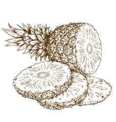 etching pineapple slices vector image