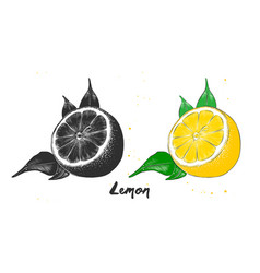 Hand drawn sketch lemon fruit in monochrome vector