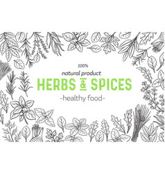 Herbs and spice vector