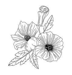 hibiscus flower modern botanical drawing vector image