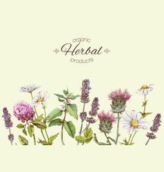 Medichinal herbs banner vector
