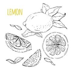 The drawn set of lemons vector