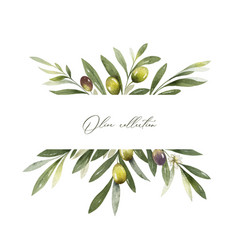 watercolor banner olive branches and vector image