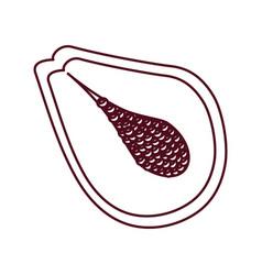 papaya slice fruit line vector image