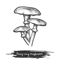 Sketch forest or wood mushroom in fairy ring vector