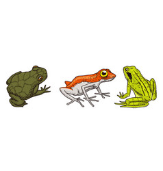 Tropical amphibians wild animals frogs vector