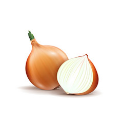 yellow onion with fresh green sprout half and vector image
