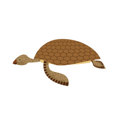 sea turtle isolated water reptile on white vector image vector image