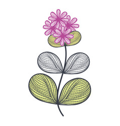 beautiful flower decoration icon vector image