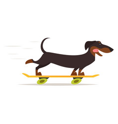 Dachshund dog riding skateboard vector