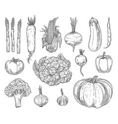 farm vegetables sketches set vector image