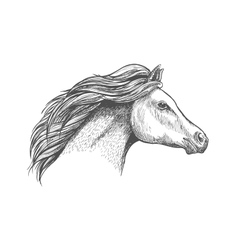 Racehorse mare head for horse racing design vector image