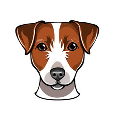 jack russell dog vector image vector image