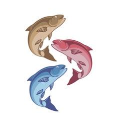 chub fish vector image