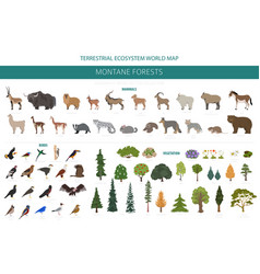 Montane forest biome natural region infographic vector