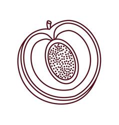 Peach harvest fruit line vector