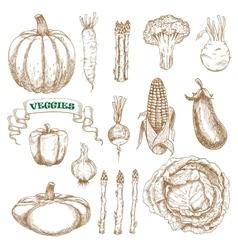 Garden and farm vegetables sketches set vector