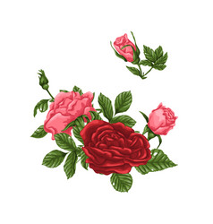 Set pink and red roses bouquets flowers and vector