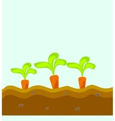 Three carrots grow in the ground vector
