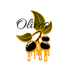 Olive fruit and oil drop sign for food design vector