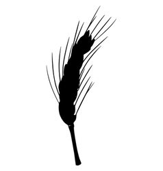silhouette of ear of wheat vector image