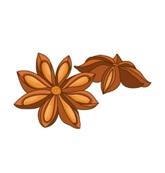 Anise star colored botanical vector image vector image