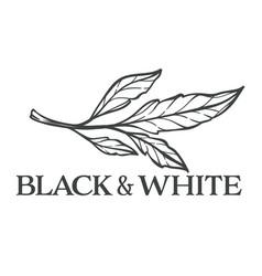 black and white floral design foliage monochrome vector image